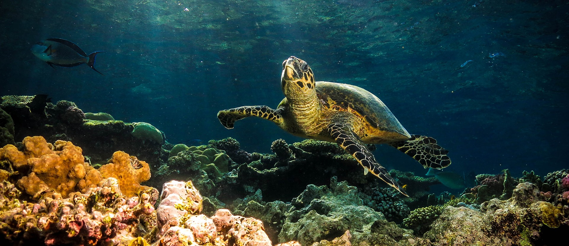 Diving Hurghada Ss.jpg